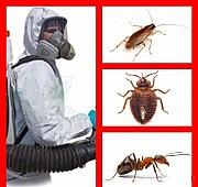 Уничтожение тараканов, блох, клопов, мышей и крыс. Одеса